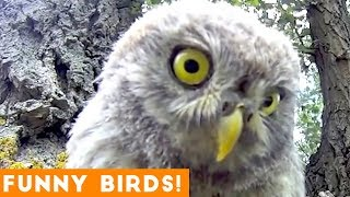 Funny Parrot & Bird Videos Weekly Compilation September 2018   Funny Pet Videos