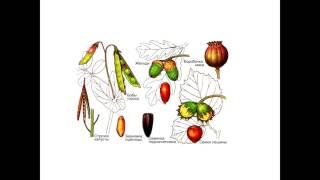 Ботаника. Плоды