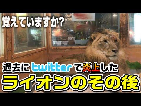 【感動】過去に流血写真で炎上したライオン、リオン君のその後
