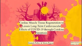 46_Cardiomyocyte Stem Cell Regeneration