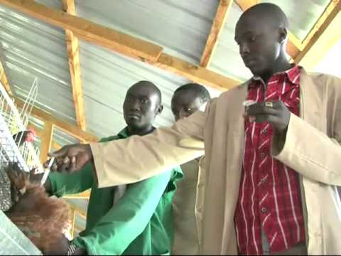 Kuku Chic Poultry Farm Production In Eldoret