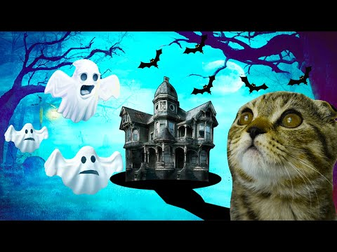 Cat vs the Haunted House- I made a maze for my pet |