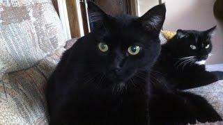 THE CATS SAY PEACE & HARMONY PLEASE