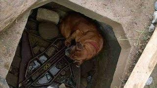 Собака ждала свою страшную участь на дне колодца, когда на помощь к ней пришла 6 летняя девочка