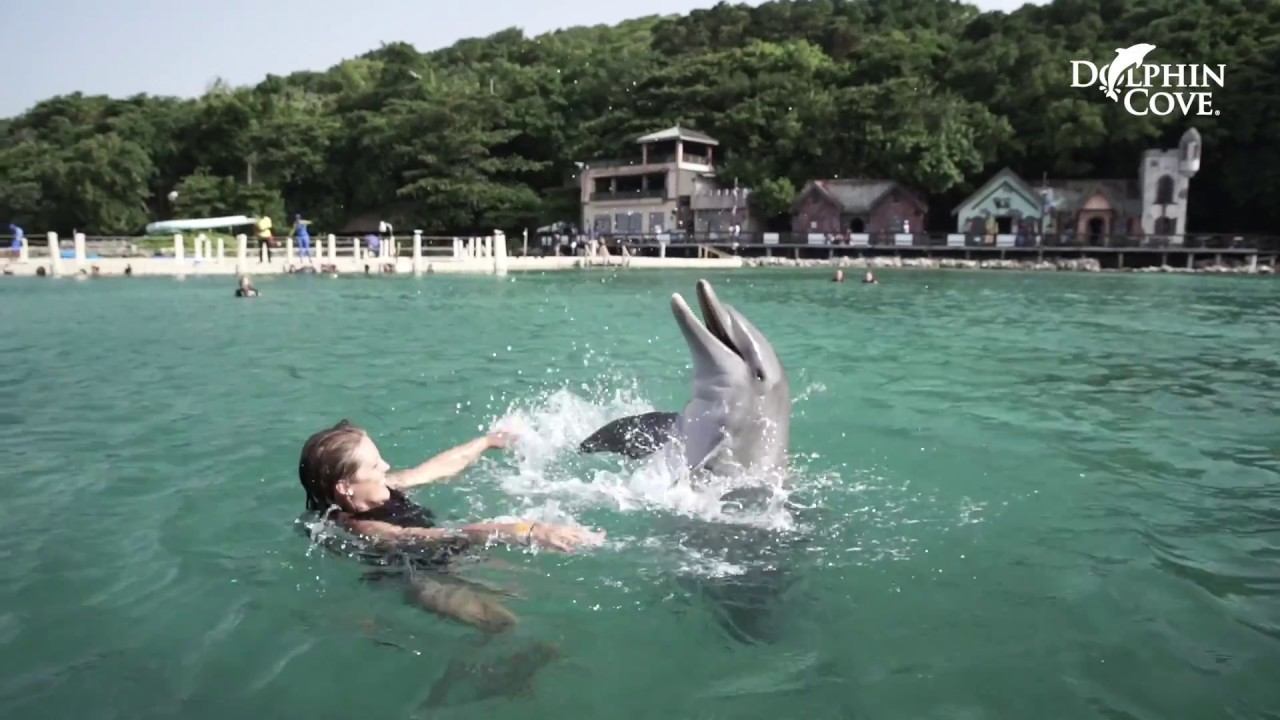 Dolphins generally give birth to just one baby at a time, which is referred to as a calf. Dolphin Cove Ocho Rios Dolphin Experience In Jamaica Youtube