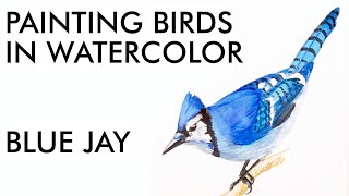 YT Painting a Blue Jay in Watercolor   painting demo
