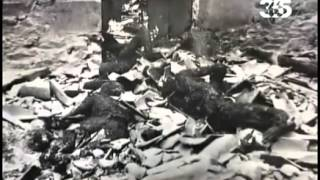 Waffen SS. Воспоминания солдат