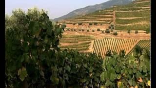 Путешествия по местам виноделия Испания и Португалия 3 Столовые вина Дору