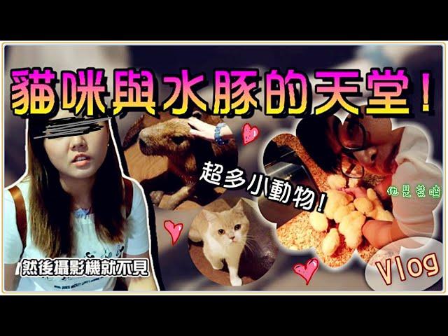 【魚乾】貓咪與水豚的天堂!橫濱Orbi動物樂園體驗!(Feat. 菜喳)