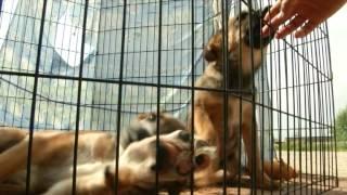 Защита животных в Калуге