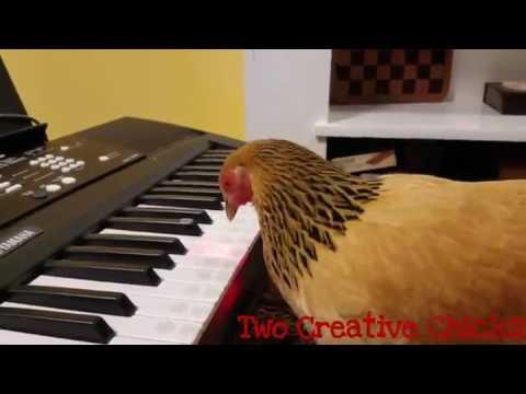 Смешные песни - Песня куриц=3 скачать mp3 песню бесплатно