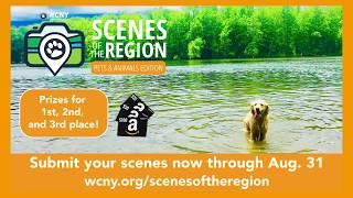 Scenes of the Region pets & animals edition
