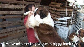 Five Big Dogs Always Want A Piggyback Ride | Kritter Klub