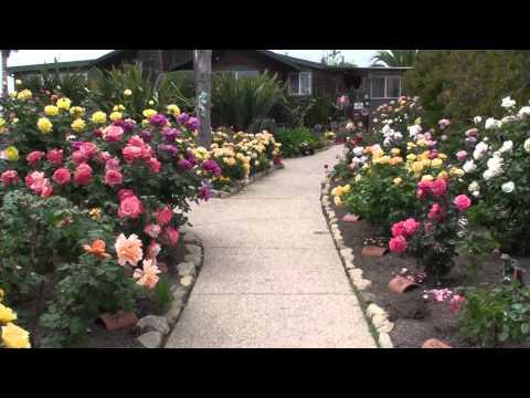 Bragg Rose Gardens 2014