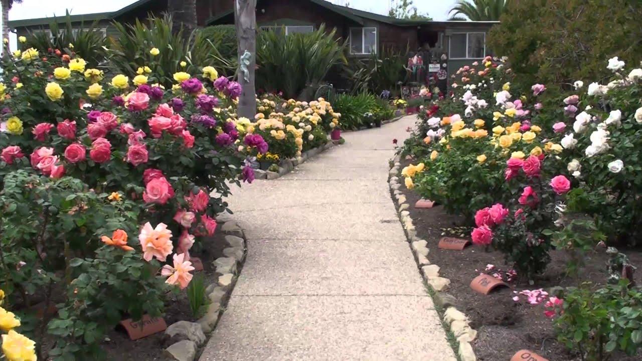 rose garden Bragg Rose Gardens 2014 - YouTube