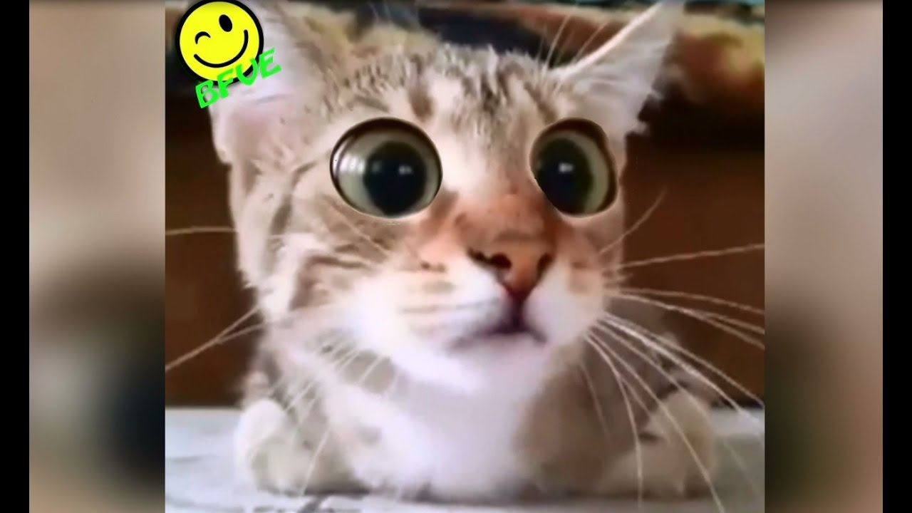 Funny Cat Watches Scary Horror Movie !! - Very Funny Video ...