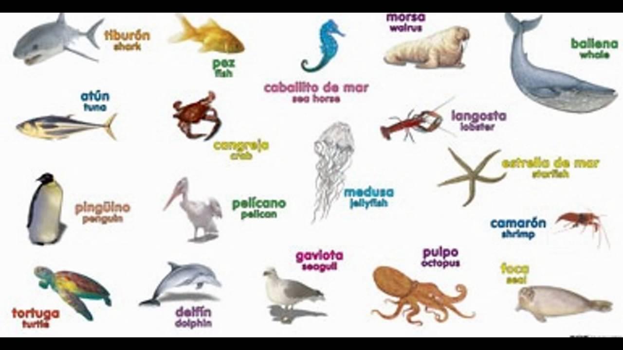 Como se llaman los animales marinos en ingles CLASE 3  YouTube