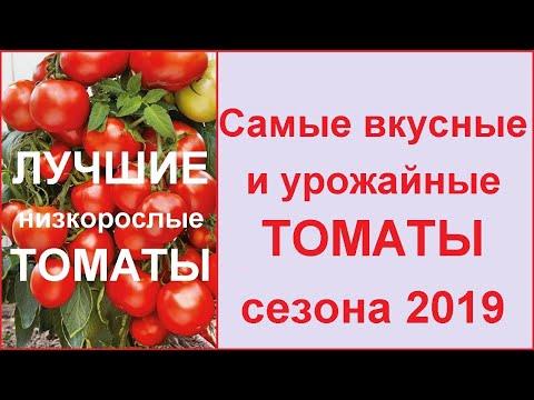 Самые УРОЖАЙНЫЕ, ЛУЧШИЕ и ВКУСНЫЕ сорта томатов (черри) 🍅Лучшие низкорослые помидоры 2019