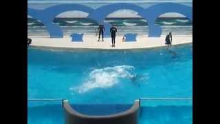 Gulf World Best Dolphin Show!