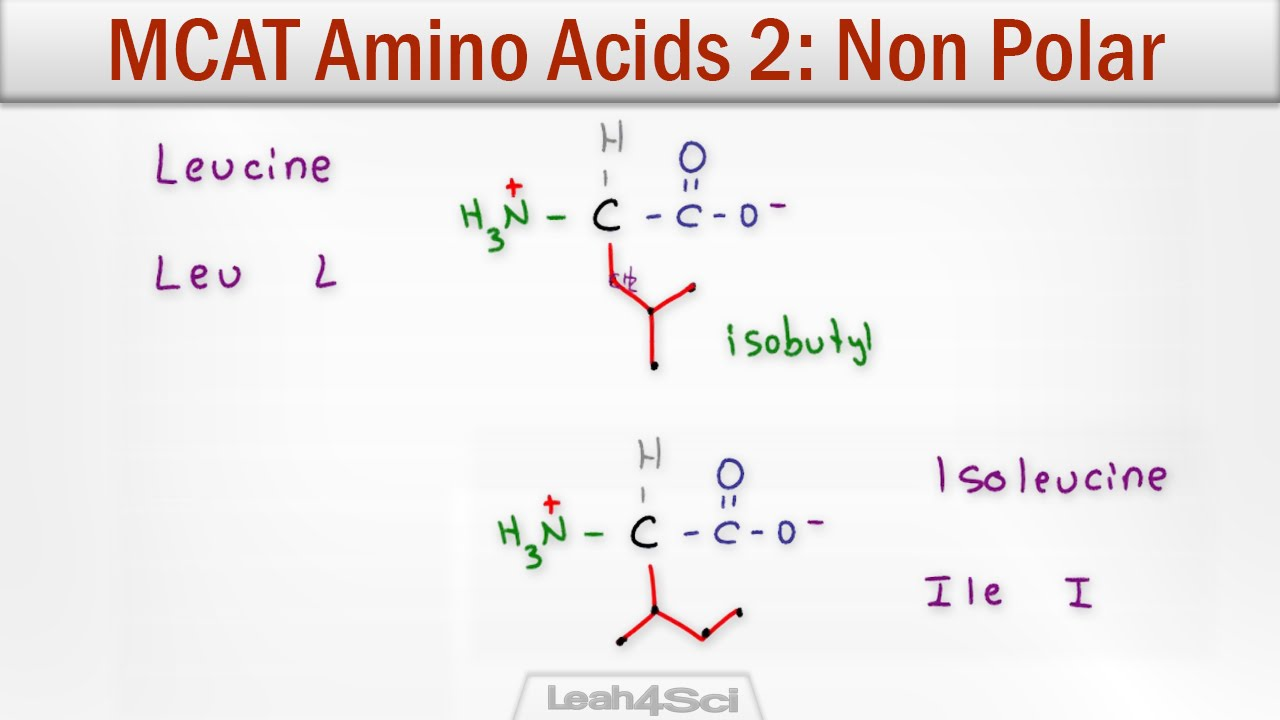 Mcat Amino Acids 2 Hydrophobic Non Polar Neutral Side Chains
