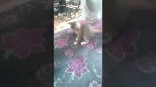 Котёнок сильно хочет кушать