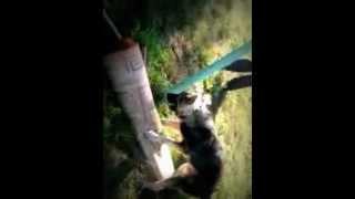 собака трахает палас .mp4