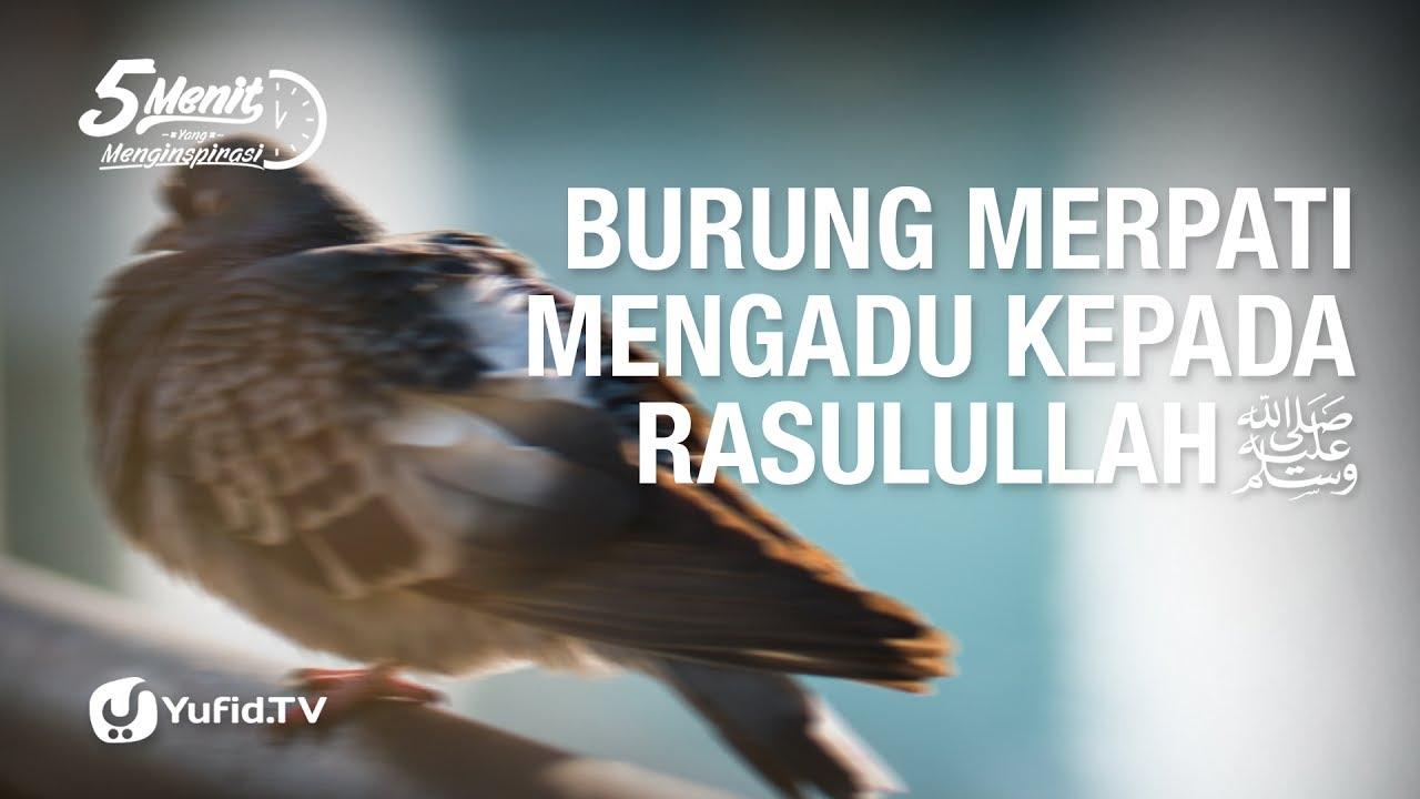 Burung Merpati Mengadu Kepada Rasulullah Lima Menit Yang Menginspirasi