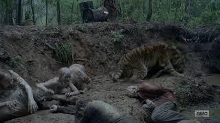 A morte de Shiva (Shiva Death) | The Walking Dead 8x4