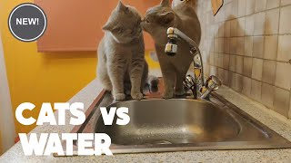 Funny Cats and cute kittens in Water and Love Swimming. Cats that love water.
