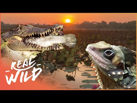 The Wonders Of The Billabong! | Real Wild Documentary
