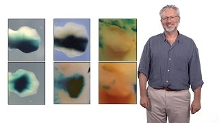 Neil Shubin (U. Chicago): The Evolution of Limbs from Fins