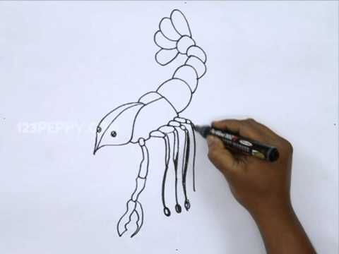 How To Draw A Crawfish Youtube
