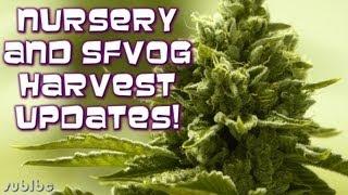 Nursery + SFVOG Harvest Updates!