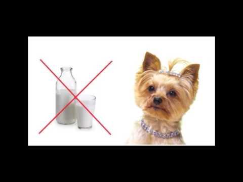 Кормление собак мелких пород