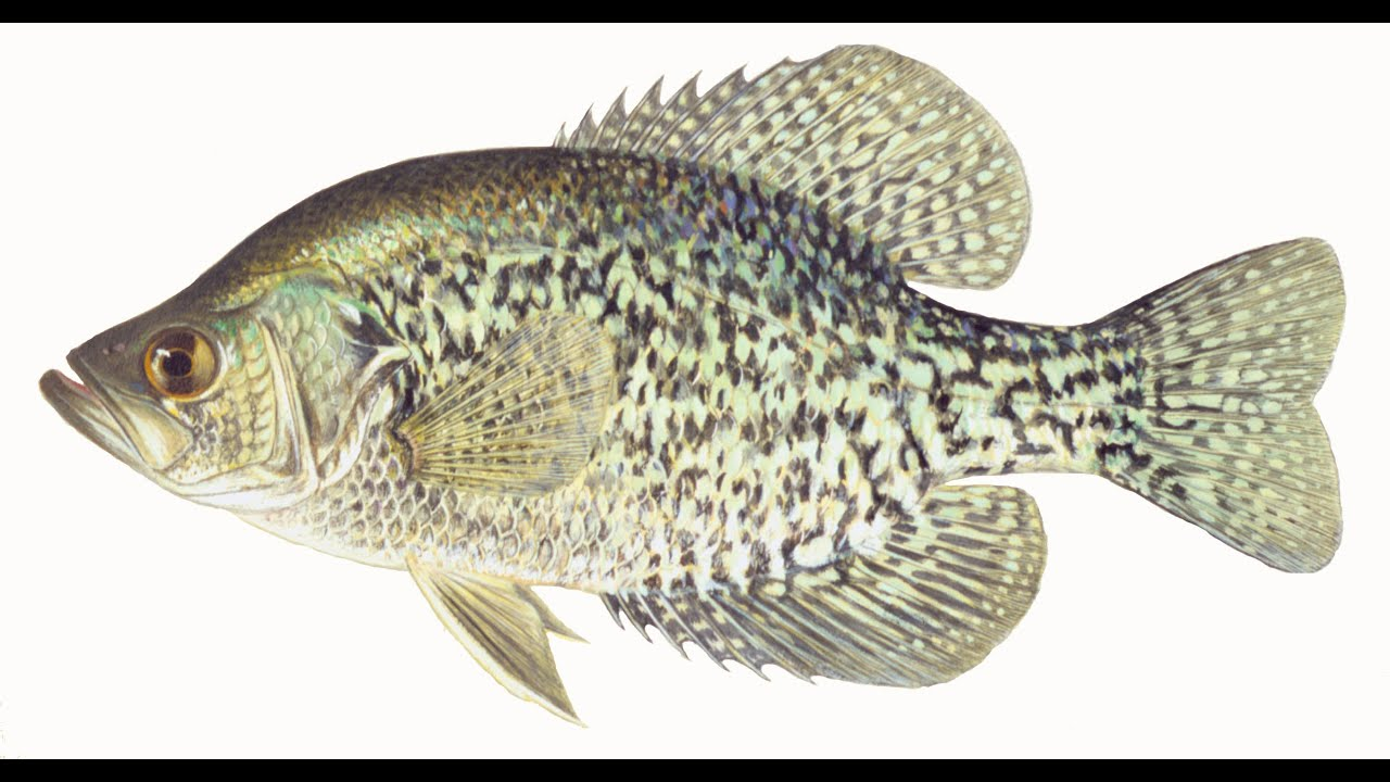 Lake ozark crappie fishing 2015 youtube youtube for Crappie fishing lake of the ozarks