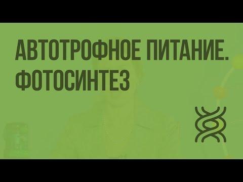 Фотосинтез 10 класс видеоурок