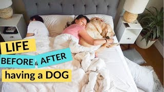 Life Before and After Having a Dog