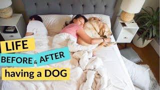 Life Before and After Having a Dog - Zazu the Labrador