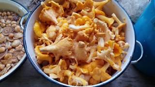 Как легко мариновать грибы. Рецепты для подножного корма