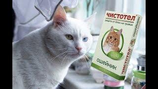отзыв ошейник для кошек и котов чистотел