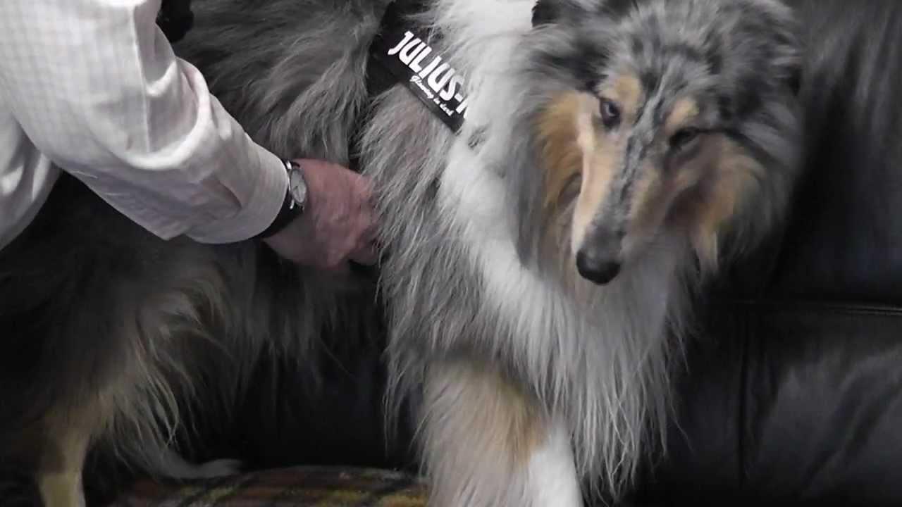 kutyahám