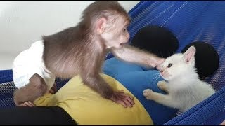 Baby Monkey | Doo's Playtime With Funny Cat Miu