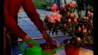 Kamerplanten verzorging, deel 4, Water.mov
