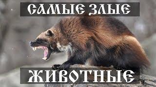 Самые злые животные в мире
