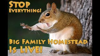 Winter Homesteading | A Big Family Homestead Live Stream