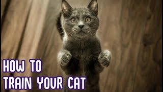 How To Train Your Cat  EASIEST CAT TRICKS!