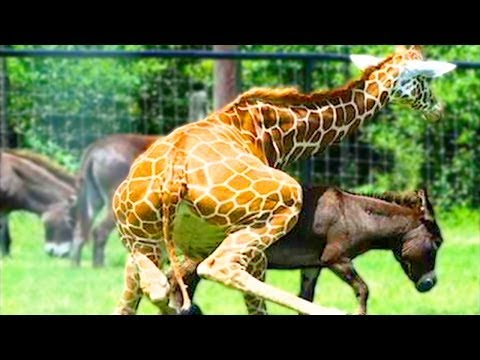 animaux zoo accouplement les mating animal strange rituals