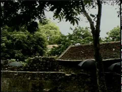 Cây trúc xinh - Thúy Hường