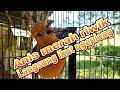 Anis Merah Gacor Pancingan Anis Merah Macet Di Jamin Langsung Nyaut  Mp3 - Mp4 Download