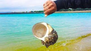世界最古の原始的すぎる針を作って釣り!【夜行貝で釣り針】